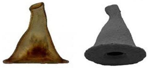 Carapace of Arcella gandalfi resembles Gandalf's wizard hat